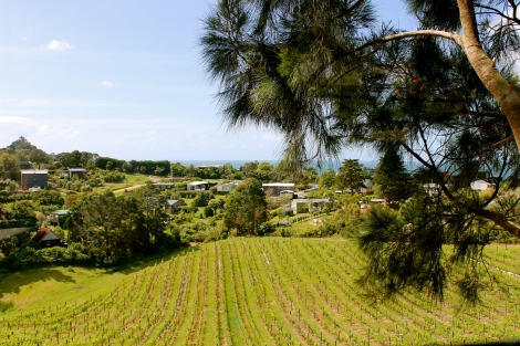The view from our table... vineyard to ocean...