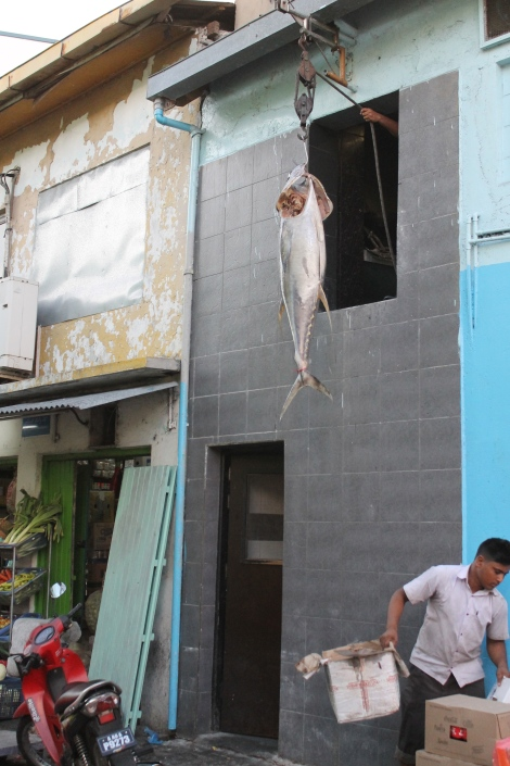 Tuna being hoisted up on to the second floor.