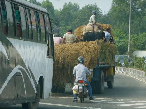 On the road to the Gabtoli cattle market