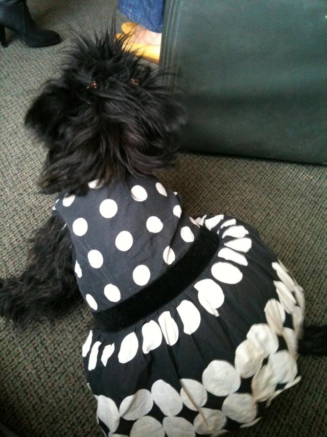 The dog in a tutu.