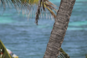 Blue sea and palm trees.